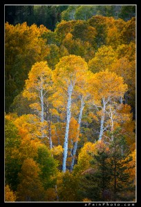 Eastern Sierra Autumn I