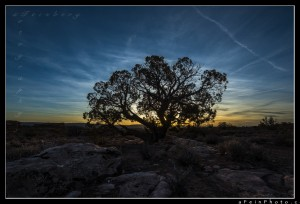 Tree silhouetted at Arches National Park