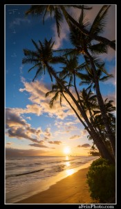 Sunset along the Lahaina coast with palm trees reaching in to the sky