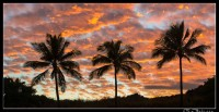 Blazing sunset behind silhoetted palms