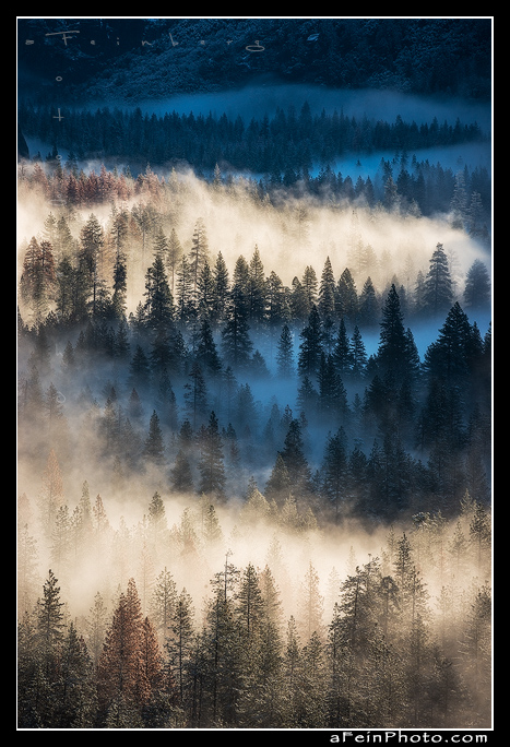 Fog hugs the tree tops in Yosemite Valley as seen from Tunnel View