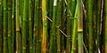 Bamboo. print