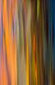 Rainbow Smear I print