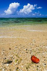 beach,blue,feinberg,kauai,red,vertical