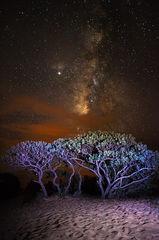 feinberg,kauai,milky way,polihale,stars,vertical, remote
