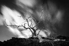 b/w,feinberg,horizontal,tree