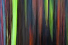 abstract,feinberg,horizontal,rainbow eucalyptus