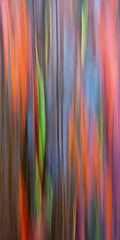 abstract,feinberg,panorama,rainbow eucalyptus,vertical