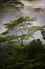 feinberg,fog,green,kauai,lush,tree,tropical,vertical