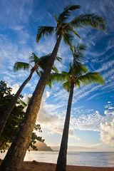 bali hai,feinberg,hanalei,kauai,palm,st. regis,sunset,vertical, princeville,