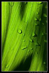 kauai, leaf, intimate, droplet, green, vertical