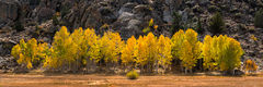 aspens,autumn,california,eastern sierra,fall,feinberg,granite,pano,panorama