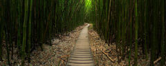 bamboo,feinberg,forest,hana,horizontal,kipahulu,maui,panorama