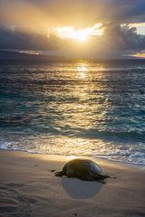 endangered,feinberg,hana,honu,seascape,turtle,vertical,wildlife