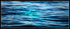 Aaron Feinberg, maui, whale, abstract, horizontal, panorama, blue, hawaii