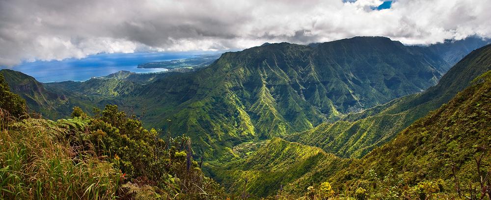 alakai swamp,feinberg,kauai,kilohana,panorama, princeville, hanalei, wainiha, green, lush, tropical, photo