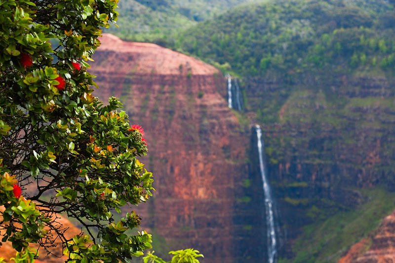 feinberg,horizontal,ohia,waimea canyon,waterfall, photo