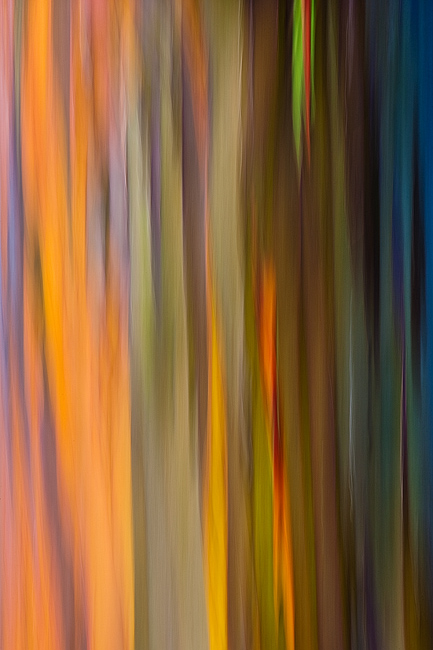 abstract,feinberg,rainbow,tree,vertical, photo