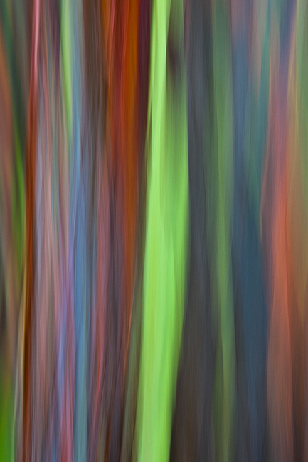 abstract,feinberg,rainbow eucalyptus,vertical, photo