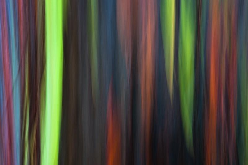 abstract,feinberg,horizontal,rainbow eucalyptus, photo
