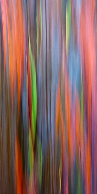 abstract,feinberg,panorama,rainbow eucalyptus,vertical, photo