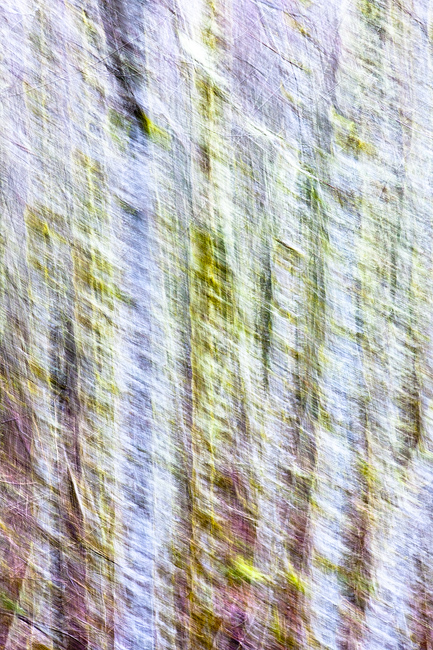 In camera abstracts of a forest scene. Experiment viewing both near and far for a different experience!  Limited Edition of 50...