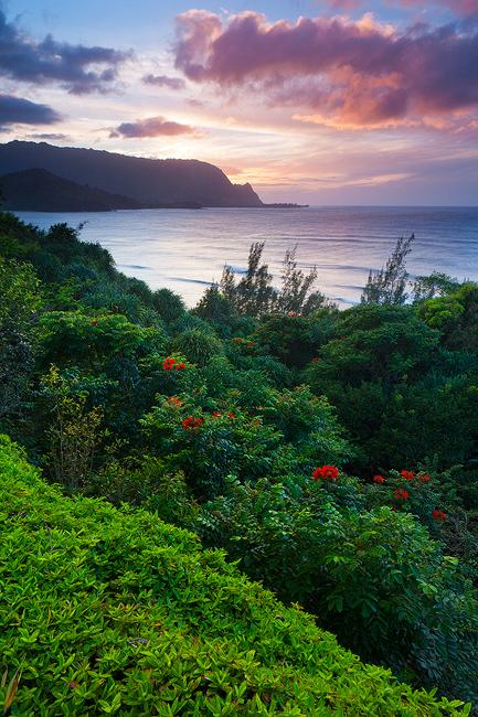 african tulip,bali hai,feinberg,kauai,makana,st regis,sunset,vertical, princeville, hanalei, photo