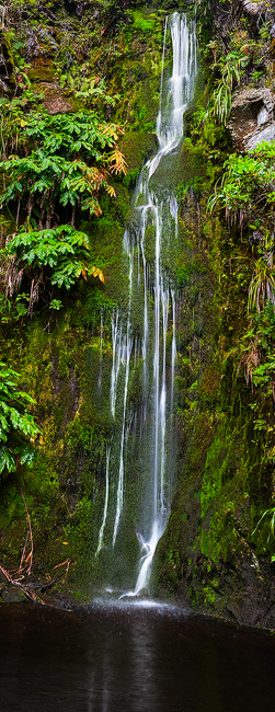 feinberg,koke'e,lush,panorama,tropical,vertical,waterfall, photo