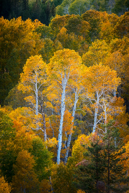 autumn,california,color,fall,feinberg,vertical, photo