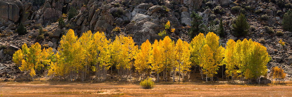 aspens,autumn,california,eastern sierra,fall,feinberg,granite,pano,panorama, photo