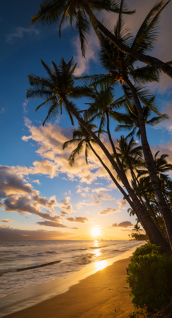 beach,feinberg,lahaina,maui,palm,palm tree,panorama,seascape,sunset,tropical,vertical, photo